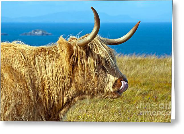 Highland Beauty Greeting Card