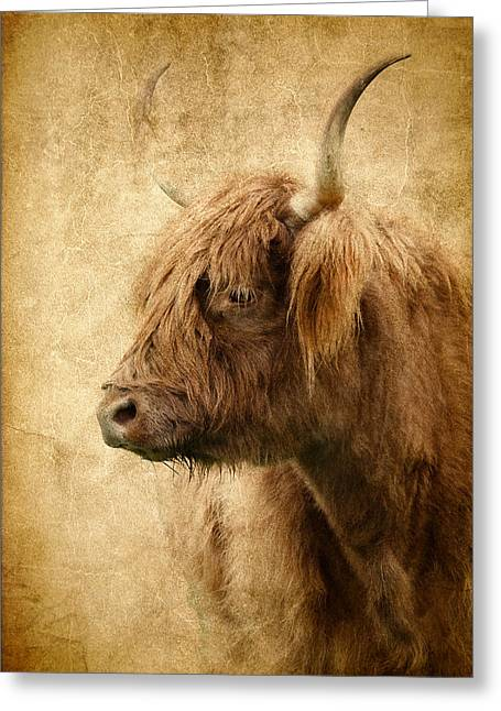Highland Bull Greeting Card