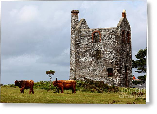 Highland Cattle And Ruined Tin Mine  Greeting Card