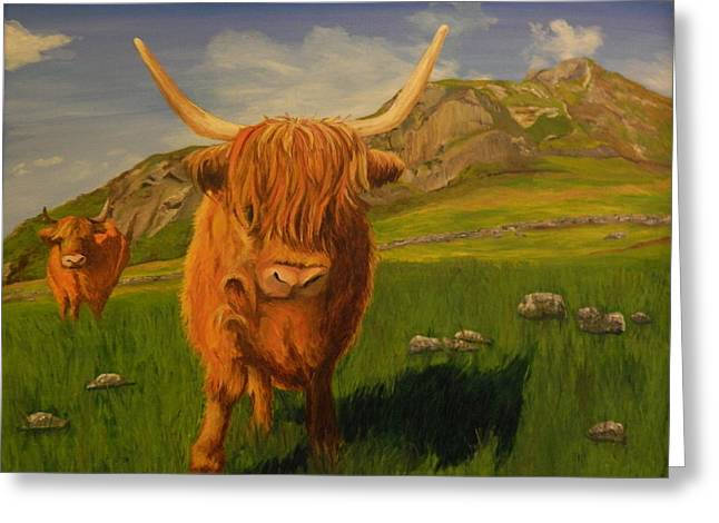 Highland Coos Greeting Card by Kelly Bossidy
