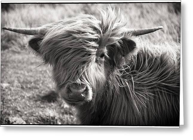 Highland Cow In The Outer Hebrides Of Scotland Greeting Card