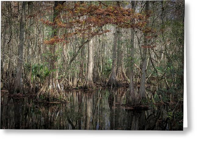 Highland Hammocks State Park Florida    Greeting Card by Rich Franco