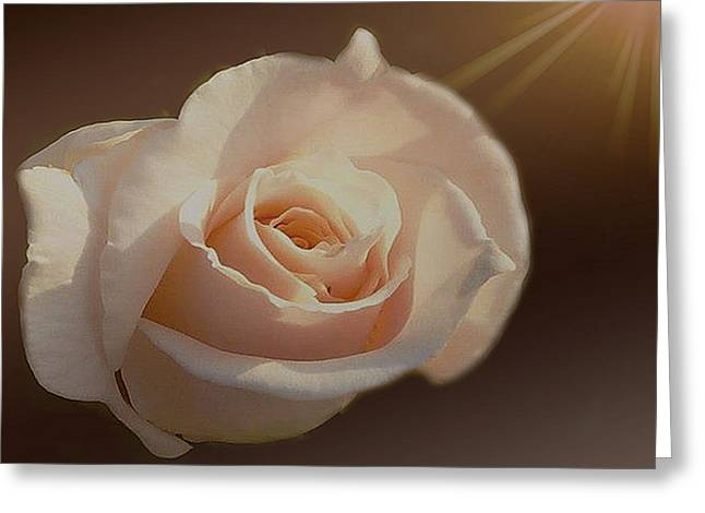 Highlighted Rose Greeting Card