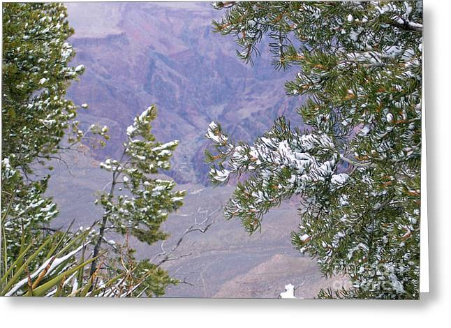 Greeting Card featuring the photograph Highlighting Snow by Roberta Byram