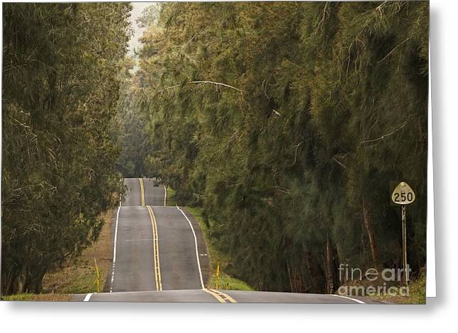 Highway 250 Greeting Card by Inge Riis McDonald
