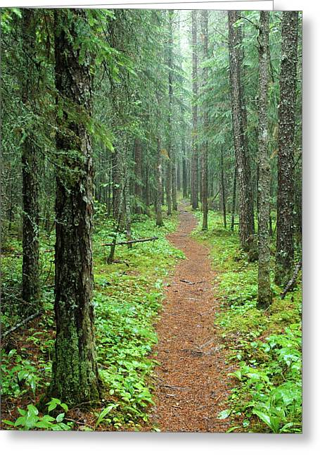 Hike To White River In Pukaskwa National Park Greeting Card