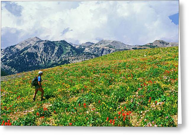 Hikers In A Meadow, South Fork Granite Greeting Card