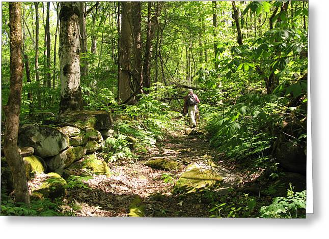 Hiking Off Trail Greeting Card by Melinda Fawver