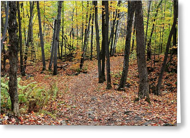 Hiking Trail In Autumn In Gatineau Park In Quebec Greeting Card by Rob Huntley