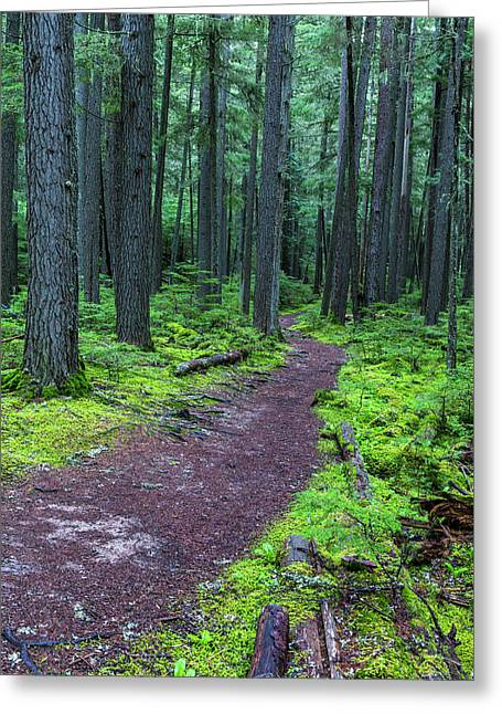 Hiking Trail Winds Through Mossy Greeting Card by Chuck Haney