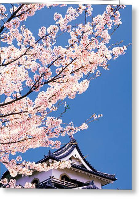 Hikone Castle W\cherry Blossoms Shiga Greeting Card by Panoramic Images