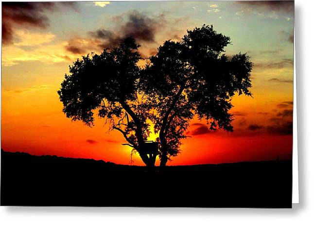 Hill Country Darkness Greeting Card by David  Norman