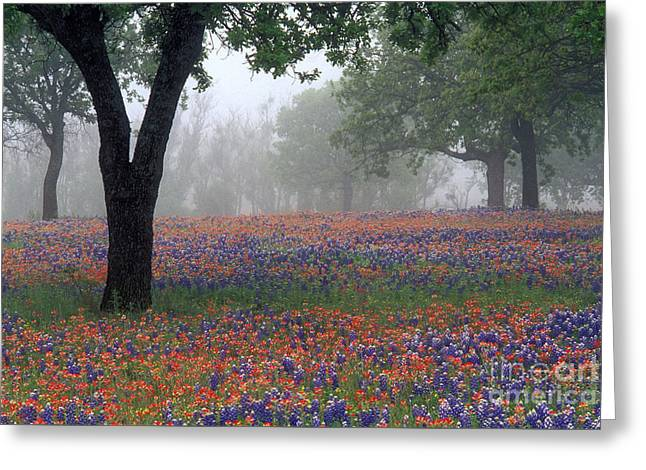 Hill Country - Fs000912 Greeting Card