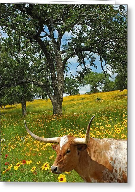 Hill Country Longhorn Greeting Card by Robert Anschutz