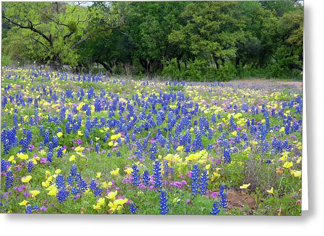 Hill Country, Texas, Bluebonnets Greeting Card by Alice Garland