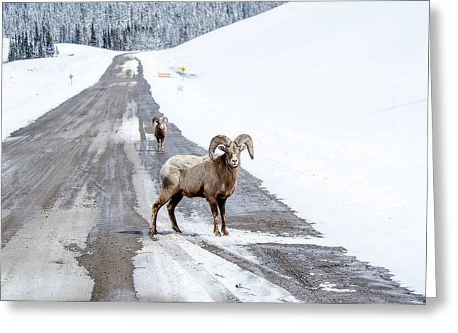 On The Road Again Big Horn Sheep  Greeting Card