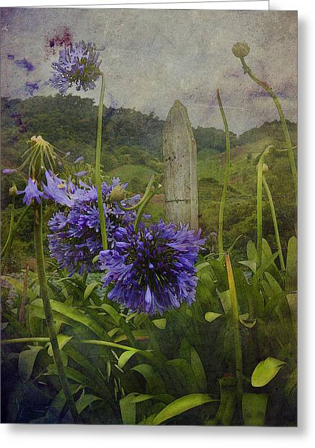 Hillside Flowers Greeting Card by Kandy Hurley