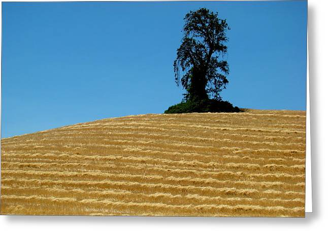 Greeting Card featuring the photograph Hillside Protector by Paul Foutz