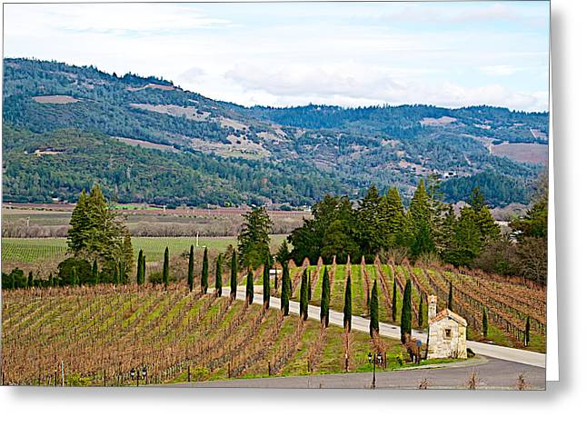 Hillside Vineyard In Front Of Castello Di Amorosa In Napa Valley-ca Greeting Card by Ruth Hager