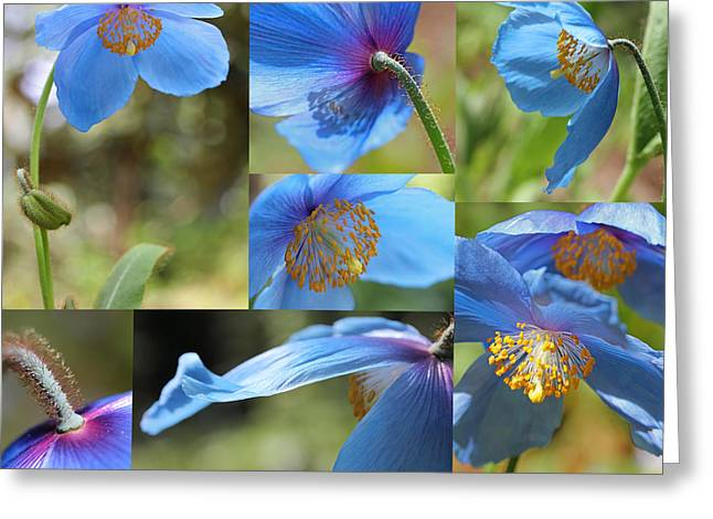 Himalayan Blue Poppy Collage Greeting Card by Jennie Marie Schell