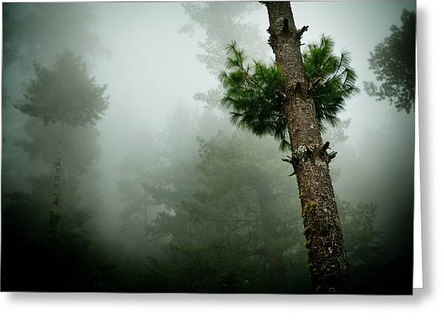 Himalyas Mist Greeting Card by Raimond Klavins
