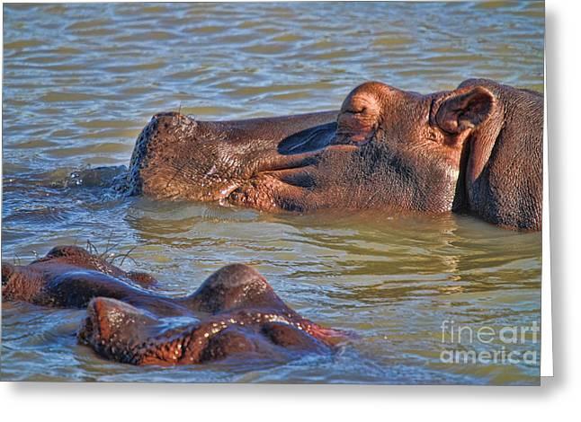 Hippo Breaststroke  Greeting Card