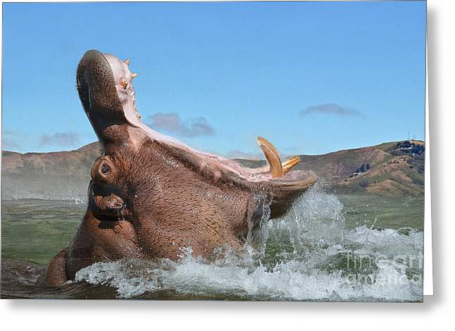 Hippopotamus Bursting Out Of The Water Greeting Card by Jim Fitzpatrick