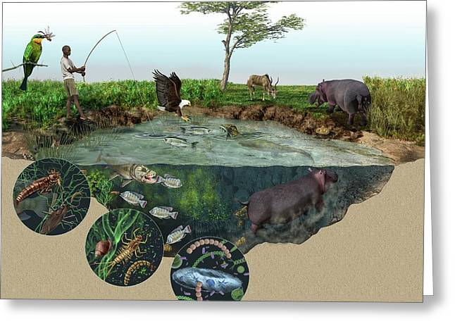 Hippopotamus Ecological Impact Greeting Card by Nicolle R. Fuller