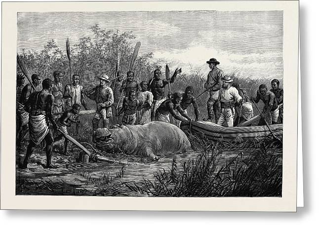 Hippopotamus Hunting In Angola West Africa 1880 Greeting Card by English School