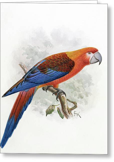 Hispaniolan Macaw Greeting Card