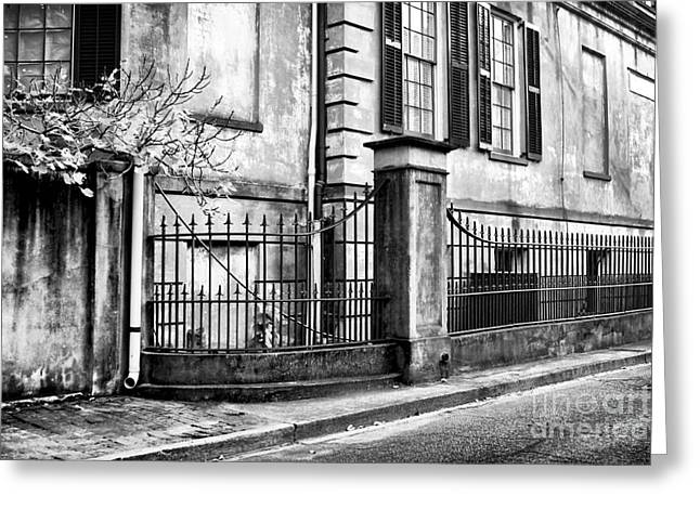 Historic Savannah Greeting Card by John Rizzuto