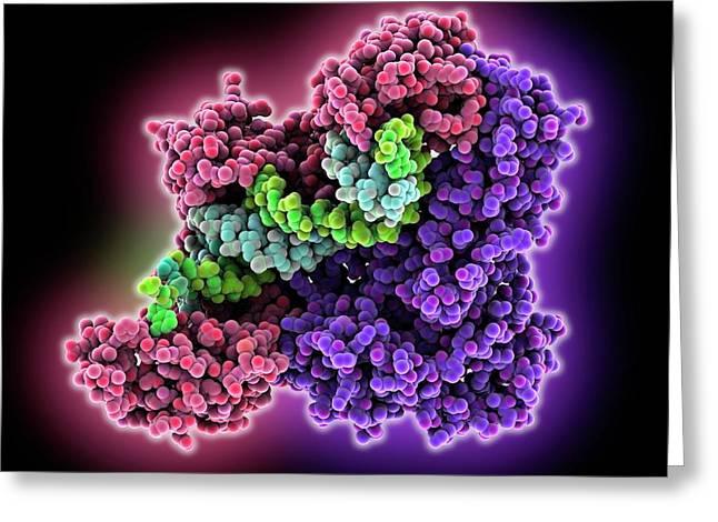 Hiv-1 Reverse Transcriptase Enzyme Greeting Card by Laguna Design