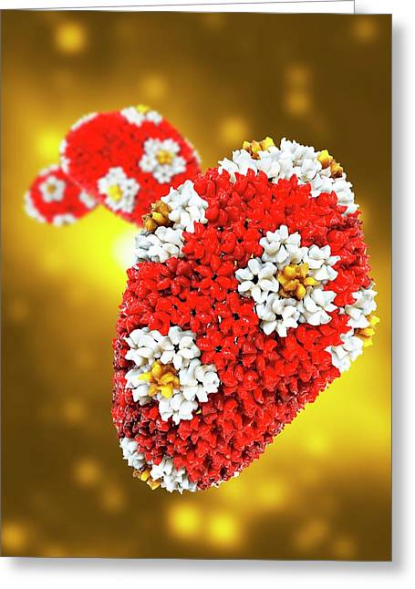 Hiv Viral Capsid Greeting Card