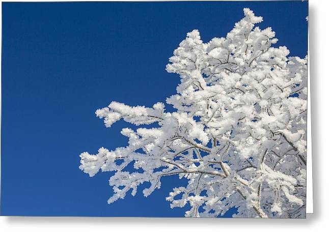 Hoar Frost And Clear Skies Greeting Card by Tim Grams