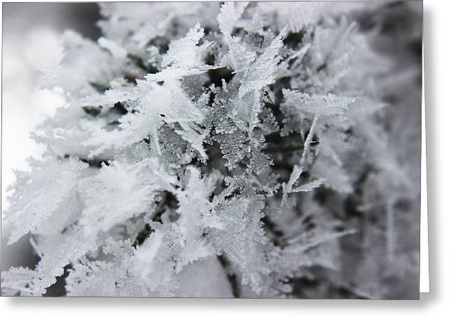 Hoar Frost In November Greeting Card