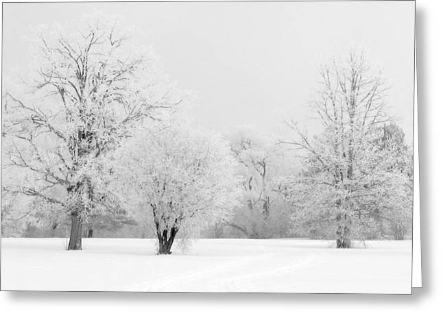 Greeting Card featuring the photograph Hoar Frost Morning by Rob Huntley