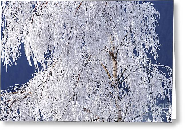 Hoar Frost On Tree Greeting Card
