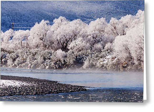 Hoar Frost On Trees By A River  Arthurs Greeting Card by Nicola M Mora