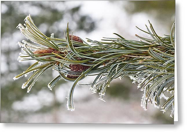 Hoar Frost Greeting Card by Steven Ralser