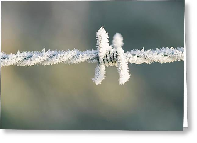 Hoare Frost On Barbed Wire Greeting Card by Ashley Cooper