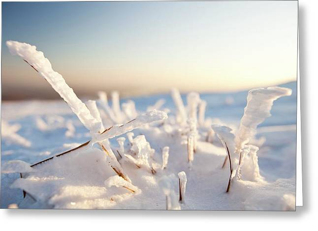 Hoare Frost On Grass Greeting Card