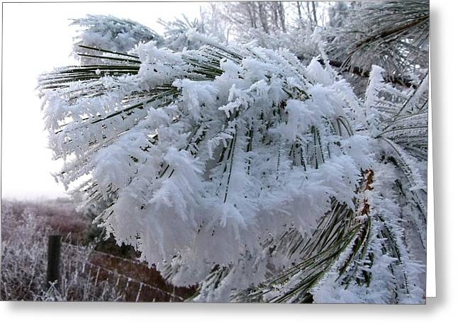 Hoarfrost 11  Greeting Card by Will Borden