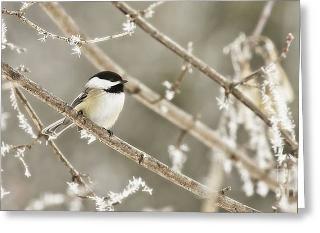 Hoarfrost Morning Greeting Card