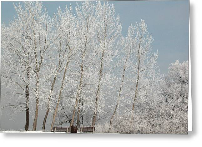 Hoarfrost Trees And Benches Along The Ottawa River Greeting Card
