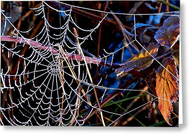 Greeting Card featuring the photograph Hoary Web by Julia Hassett