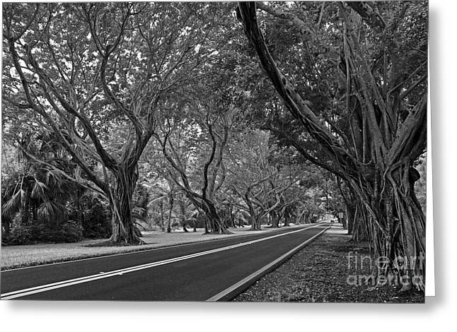 Hobe Sound Bridge Rd. West II Greeting Card by Larry Nieland