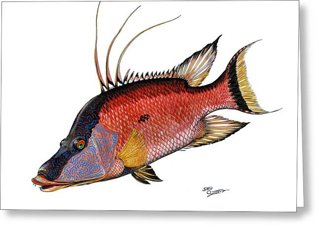 Hogfish On White Greeting Card