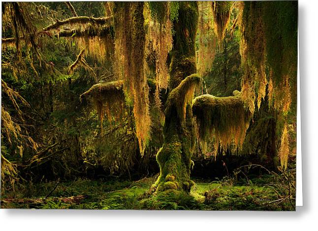 Hoh Rain Forest Greeting Card by Leland D Howard