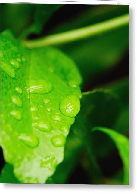 Holding Raindrops Greeting Card