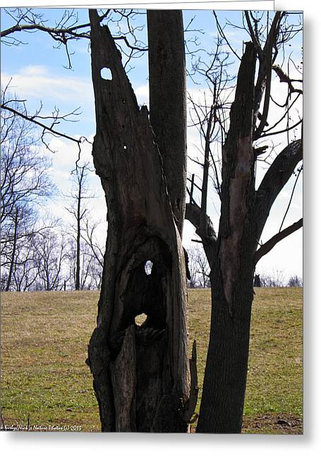 Greeting Card featuring the photograph Holey Tree Trunk by Nick Kirby